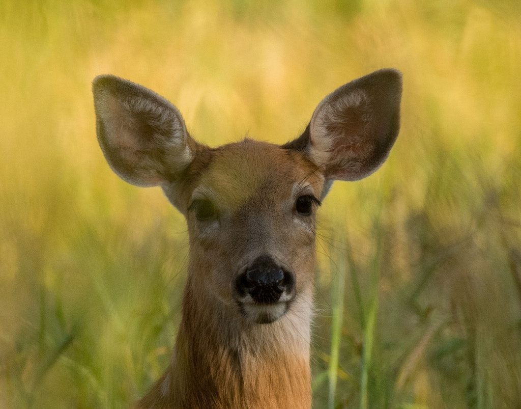 what colors can deer see?