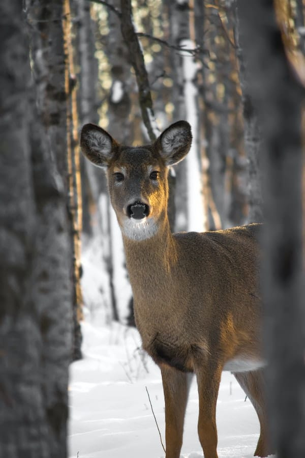 when do deer move the most during the day