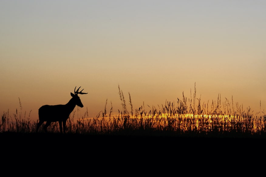 does moon phase impact deer movement?